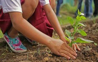 productos ecológicos frente a no ecológicos